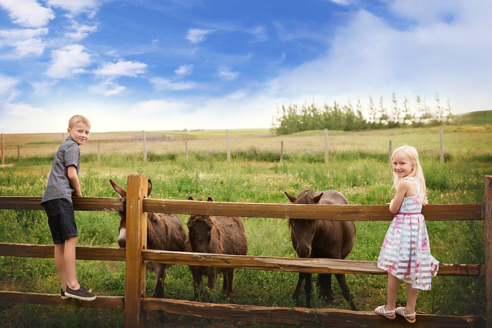 A boy and a girl looking at donkeys and a mini horse. Calgary photographer. Milashka Photography