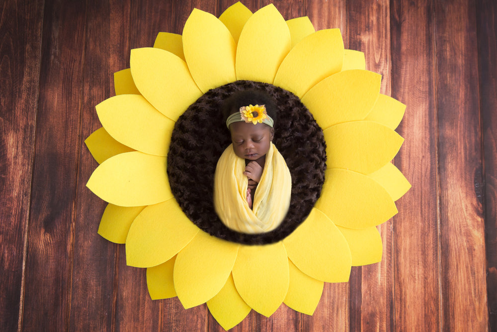 Newborn baby girl wrapped in the yellow wrap with a sunflower headband, lying in the middle of a giant sunflower prop. Newborn Photoshoot ideas. Calgary Newborn Photographer. Milashka Photography