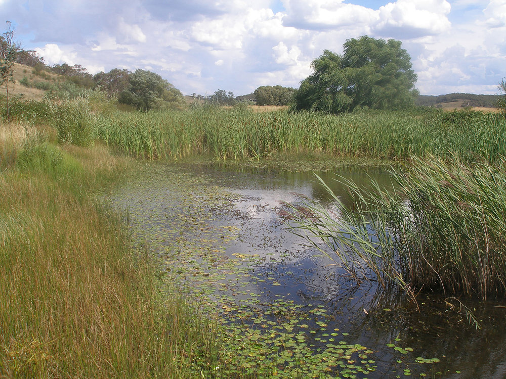 'Building water catchment and community resilience at Mulloon'