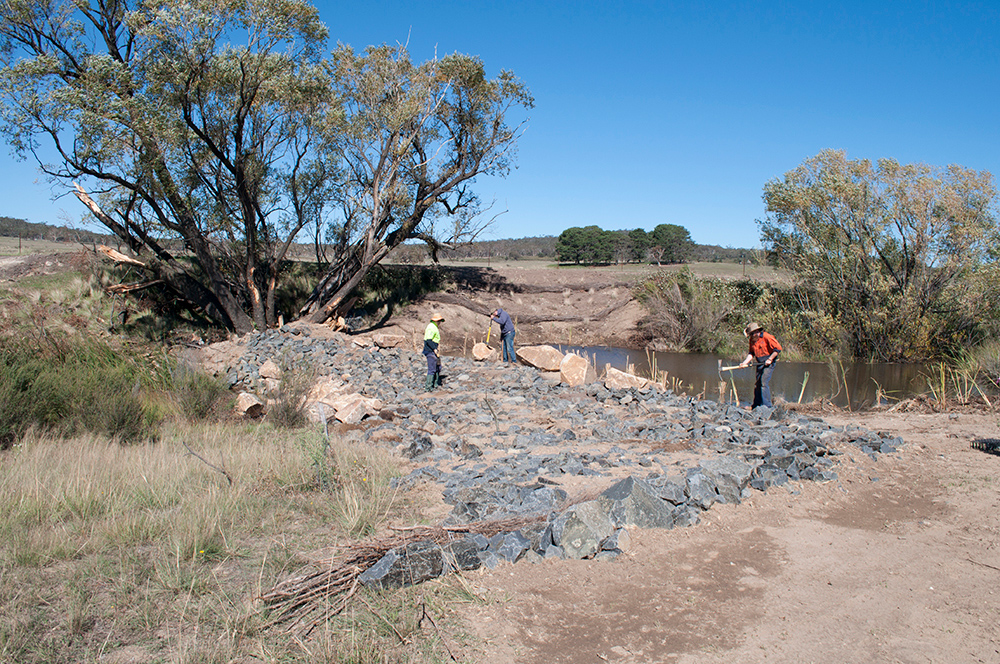 Green Army undertaking revegetation work
