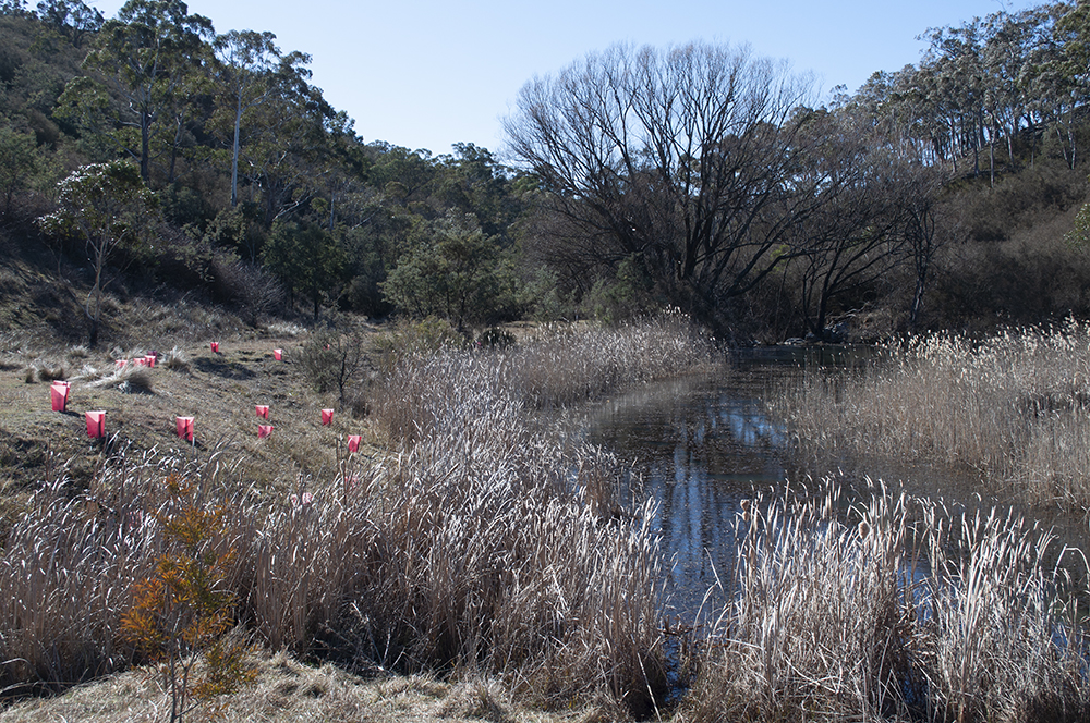 Peter's Pond is still holding water and hydrating the surrounding landscape, with a trickle continuing downstream.