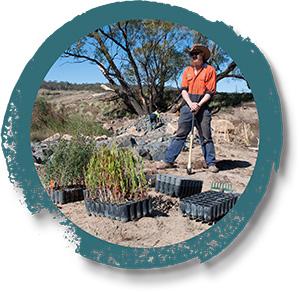 seedlings-300px.jpg
