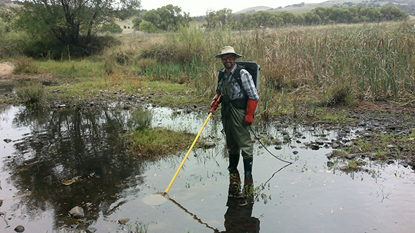 Dr Dan Starrs conducting electro backpack fishing in the Mulloon Creek Catchment