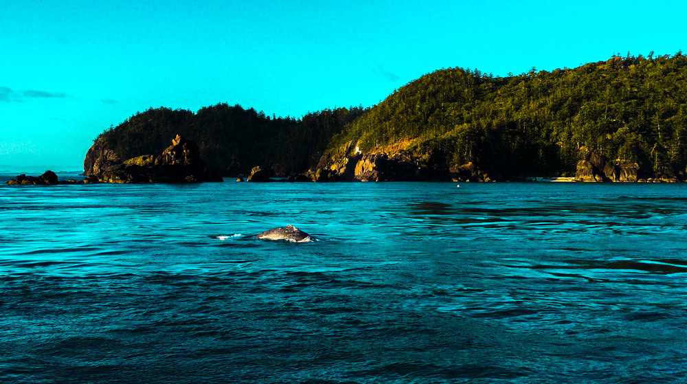 Whitsunday Islands (Whales)