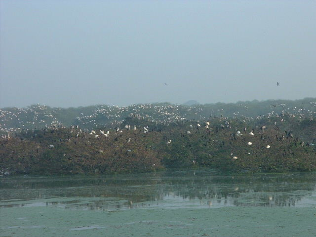 Vedanthangal bird sanctuary. OK so the picture's crap, but you get the idea - a breeding colony of tens of thousands of birds. We liked it