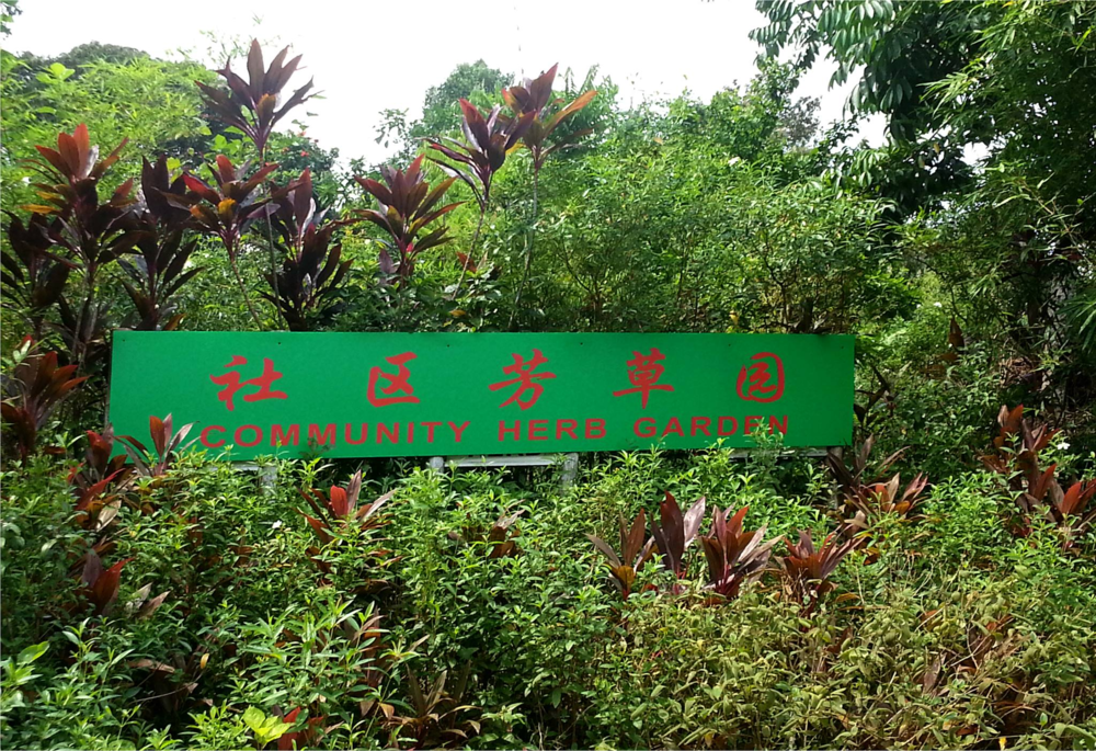 Photo courtesy of NTU Herb Garden