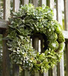 Succulent wreath vivaterra