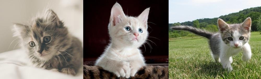 Epicure's SEO Kittens
