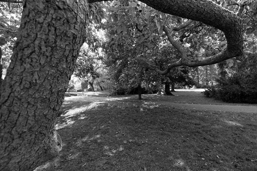 Klimboom park Zitterd