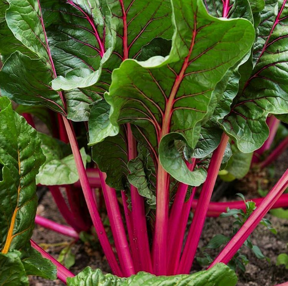 Swiss Chard Photo: @thehappygardeninglife