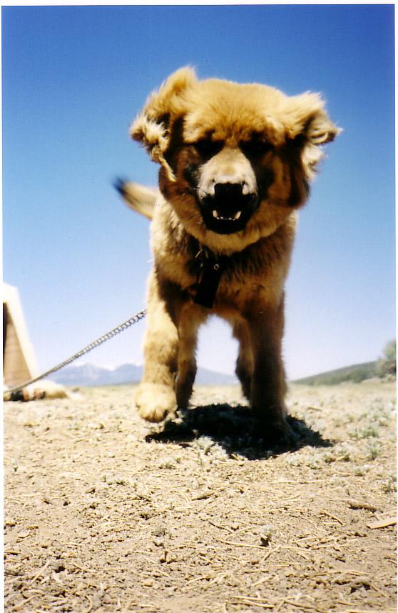 Q.dog-bone.jpg
