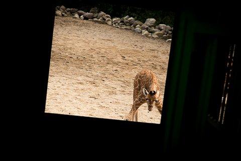 Belveau Zoo LQ-31.jpg