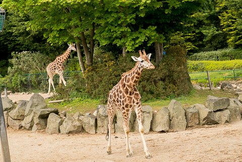 Belveau Zoo LQ-35.jpg