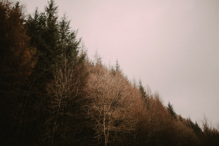 a beautiful landscape of forestry in glencoe