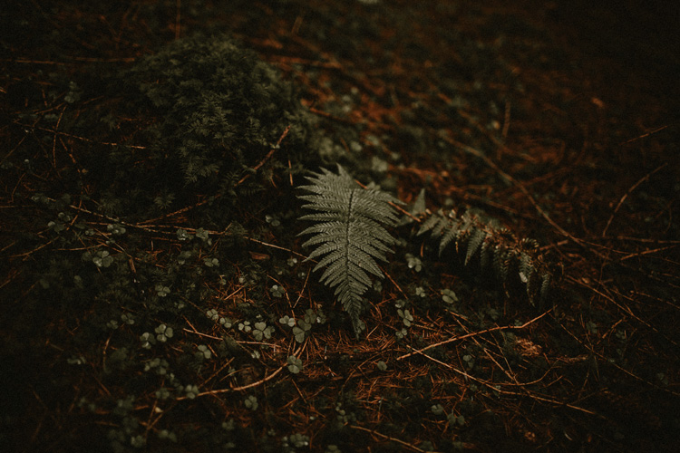 wet pine leaf on forest floor during glencoe engagement