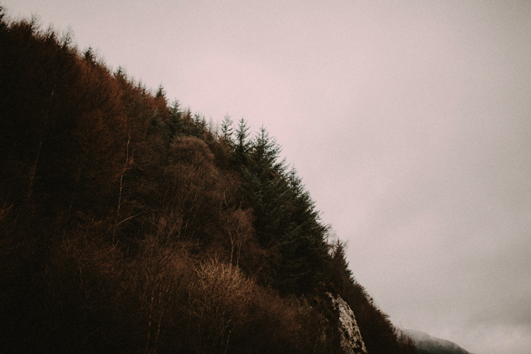 landscape image of forest trees in glencoe engagement