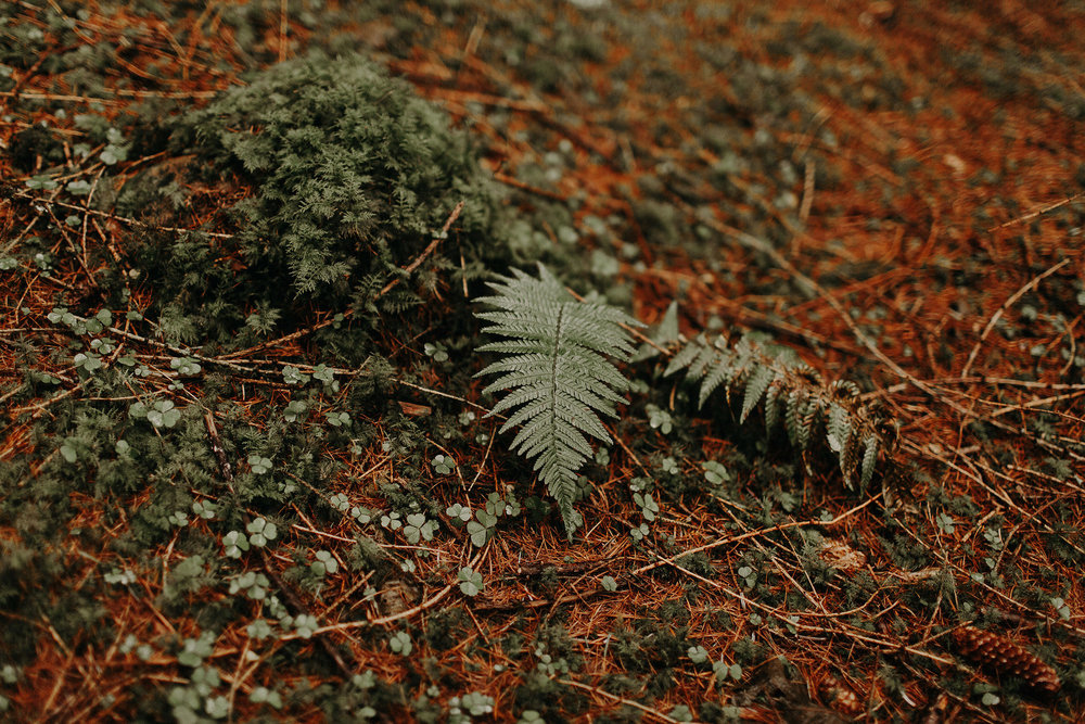 GlencoeElopementPhotographer0011.jpg
