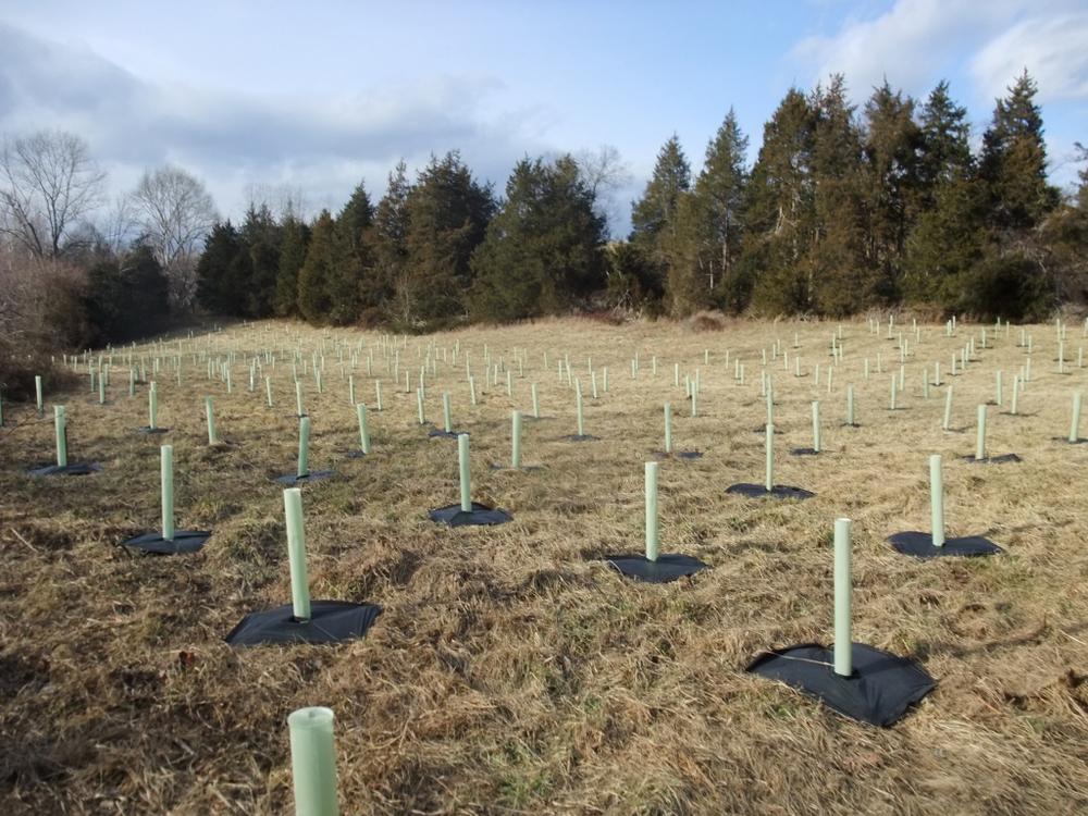 3' Tubex Standard Treeshelters | 3' x 3' weedmats