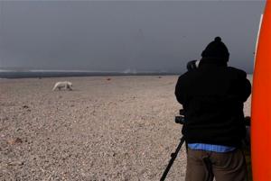 Dr. Adrian Aebischer photographing a polar bear.