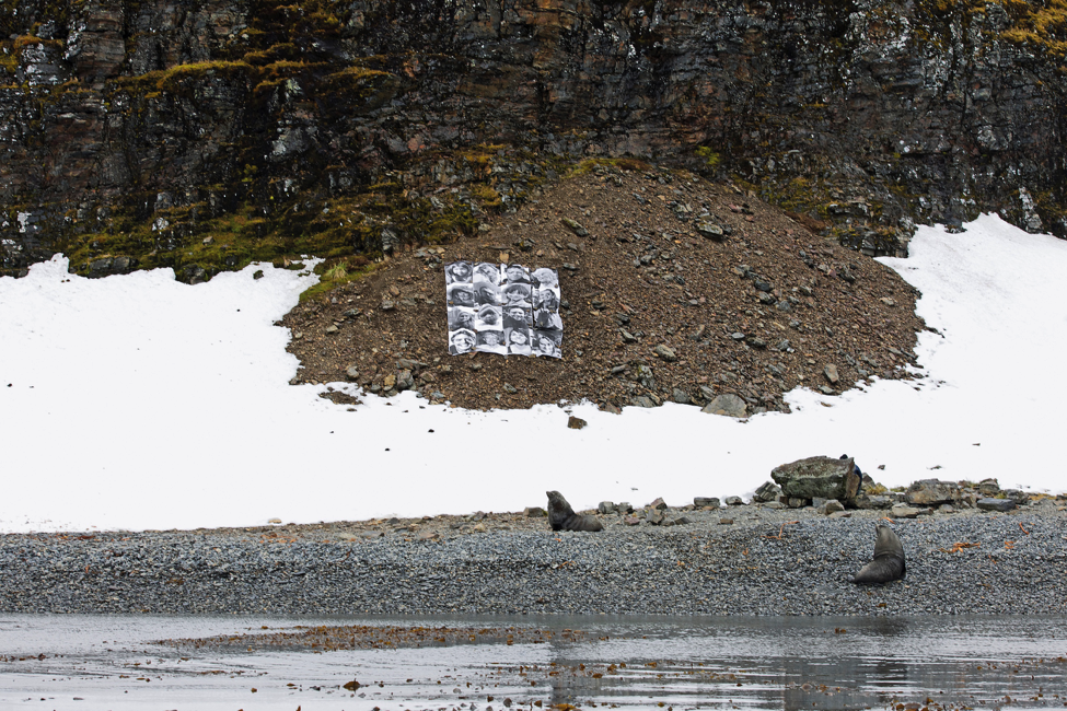 JR's artwork on the rocky slope, watched by an admiring fur seal.  -
