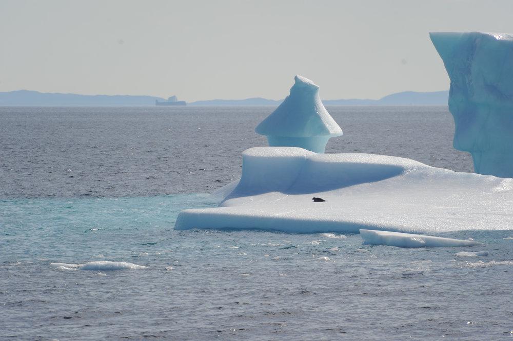 Greenland - 2011