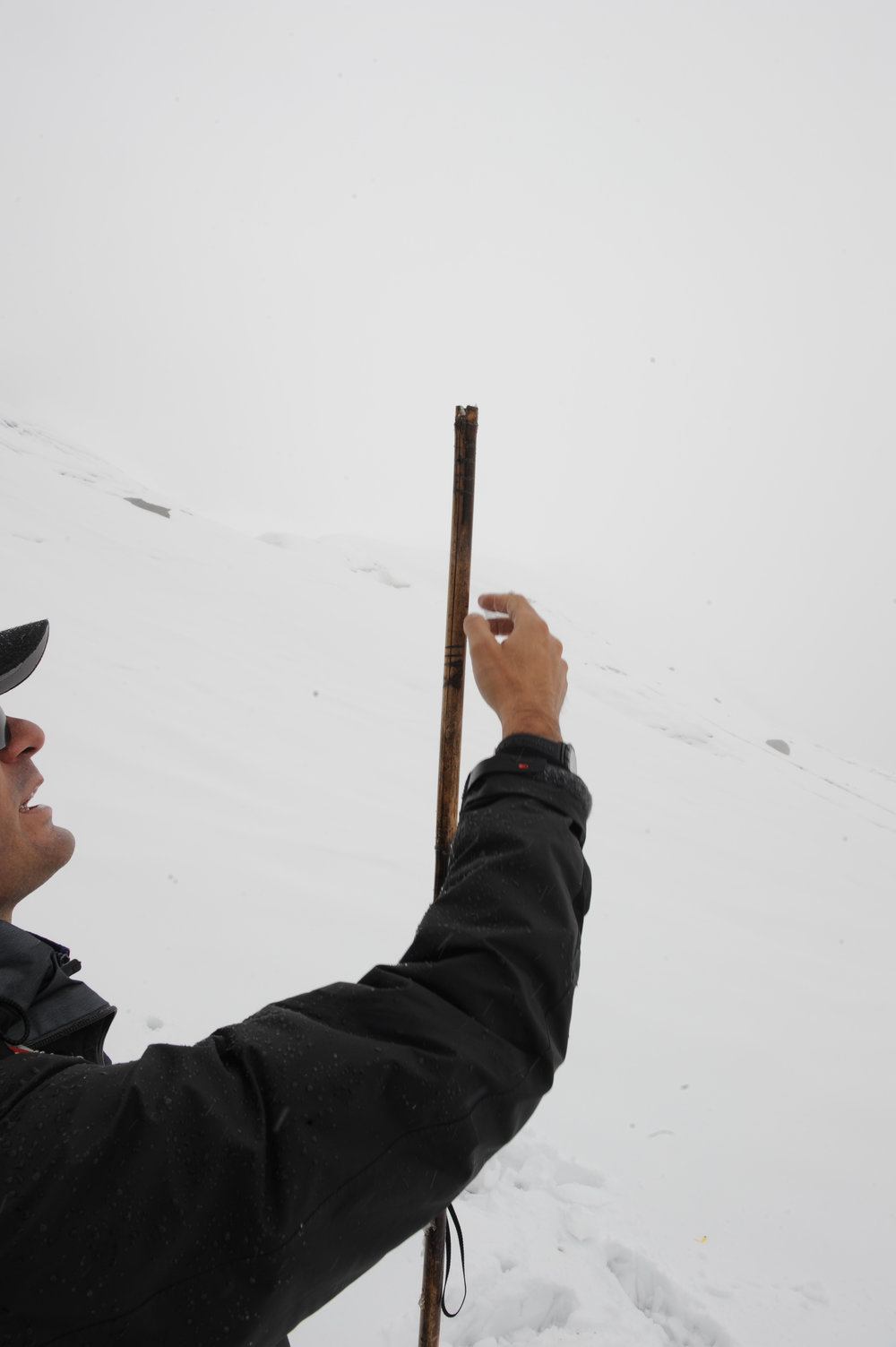 Looking at the marks on bamboo stakes.