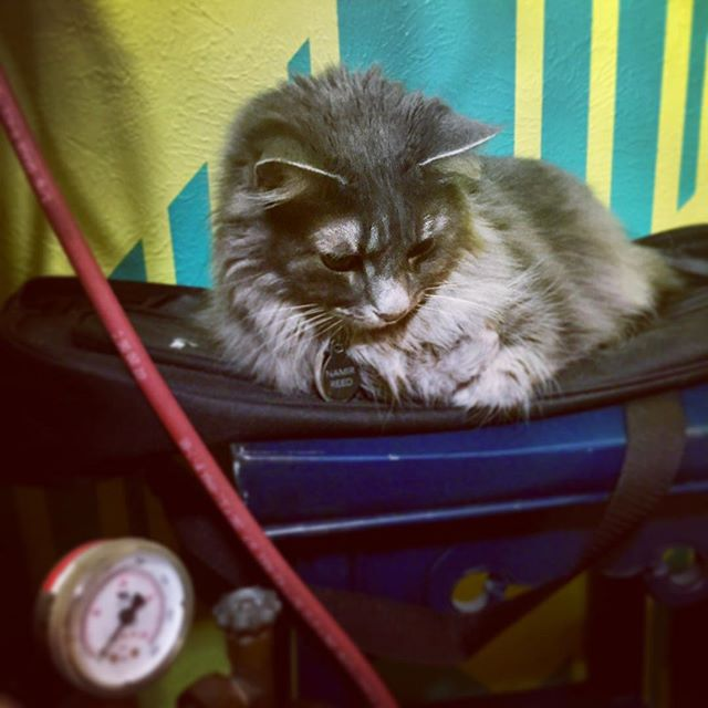 This is ShopCat. He has claimed my ukulele gig bag as a bed at every given opportunity. Pretty sure I just need to find a place in the studio to hang my uke at this point. #aboutmyuke #catsofinstagram #shopcat #catssleepinginweirdplaces #still_doesnt_like_the_puppy