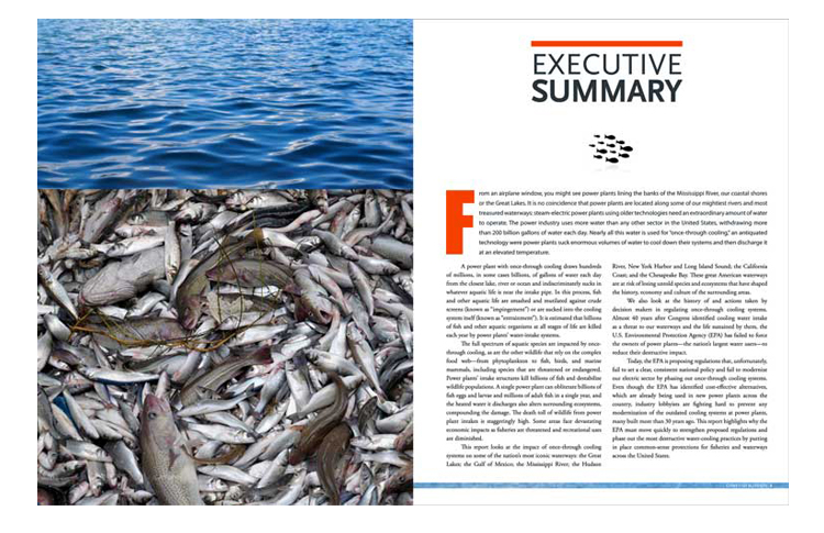 Giant Fish Blenders  Client: The Sierra Club Role: Photo research, art direction, design and production of 32-page report.