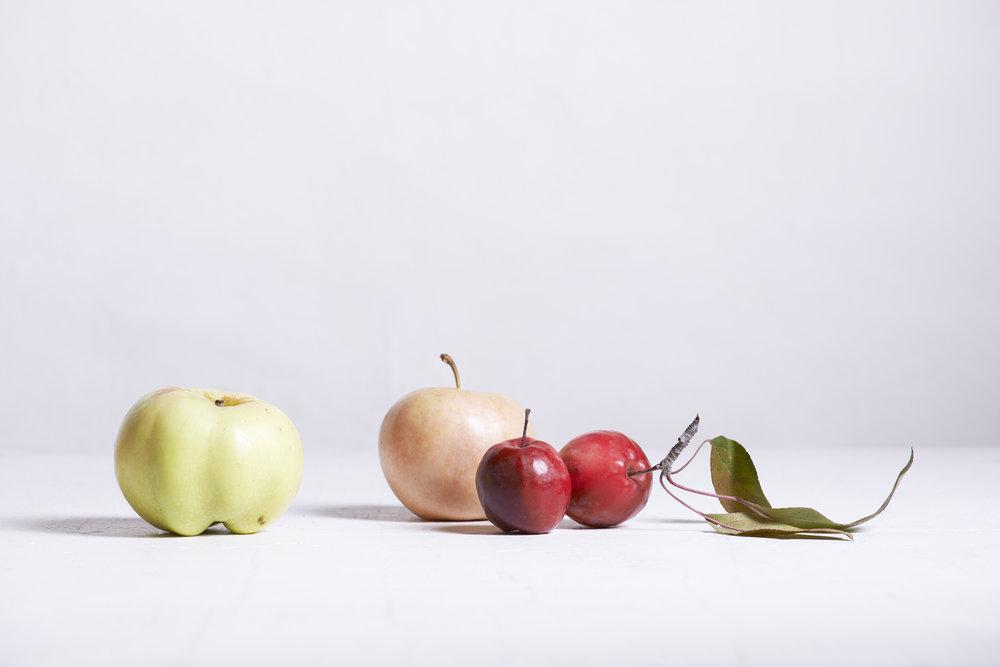 Apples 1409_01.jpg