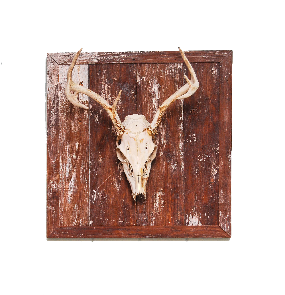 Skull & Antlers w/ wall mount