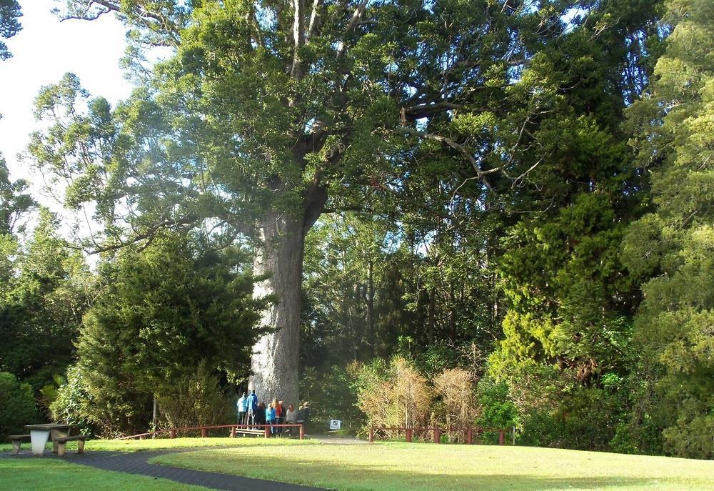 Matakana Coast_Warkworth Parry Kauri Park web.jpg