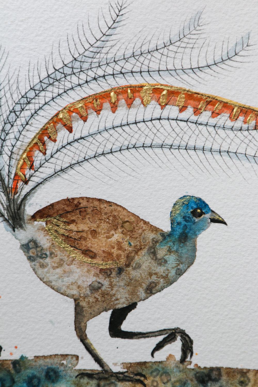 Lyrebird detail.jpg