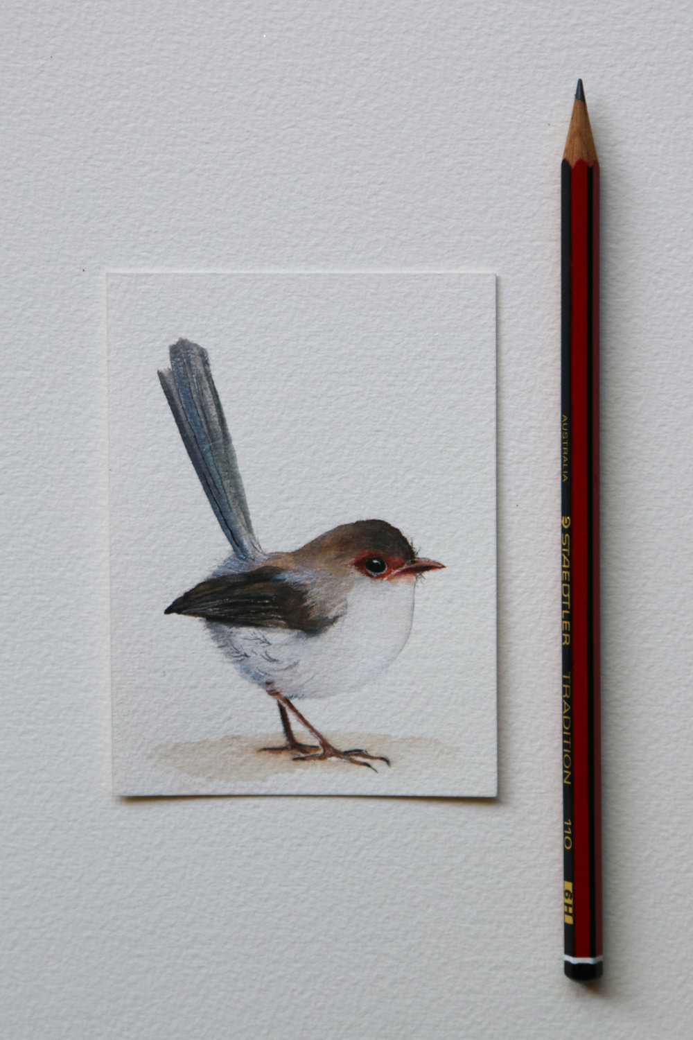 Brown Wren.jpg