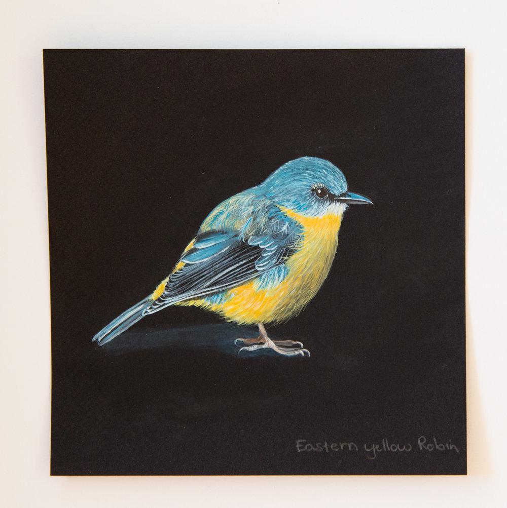 #8. Eastern Yellow Robin  (1 of 1).jpg