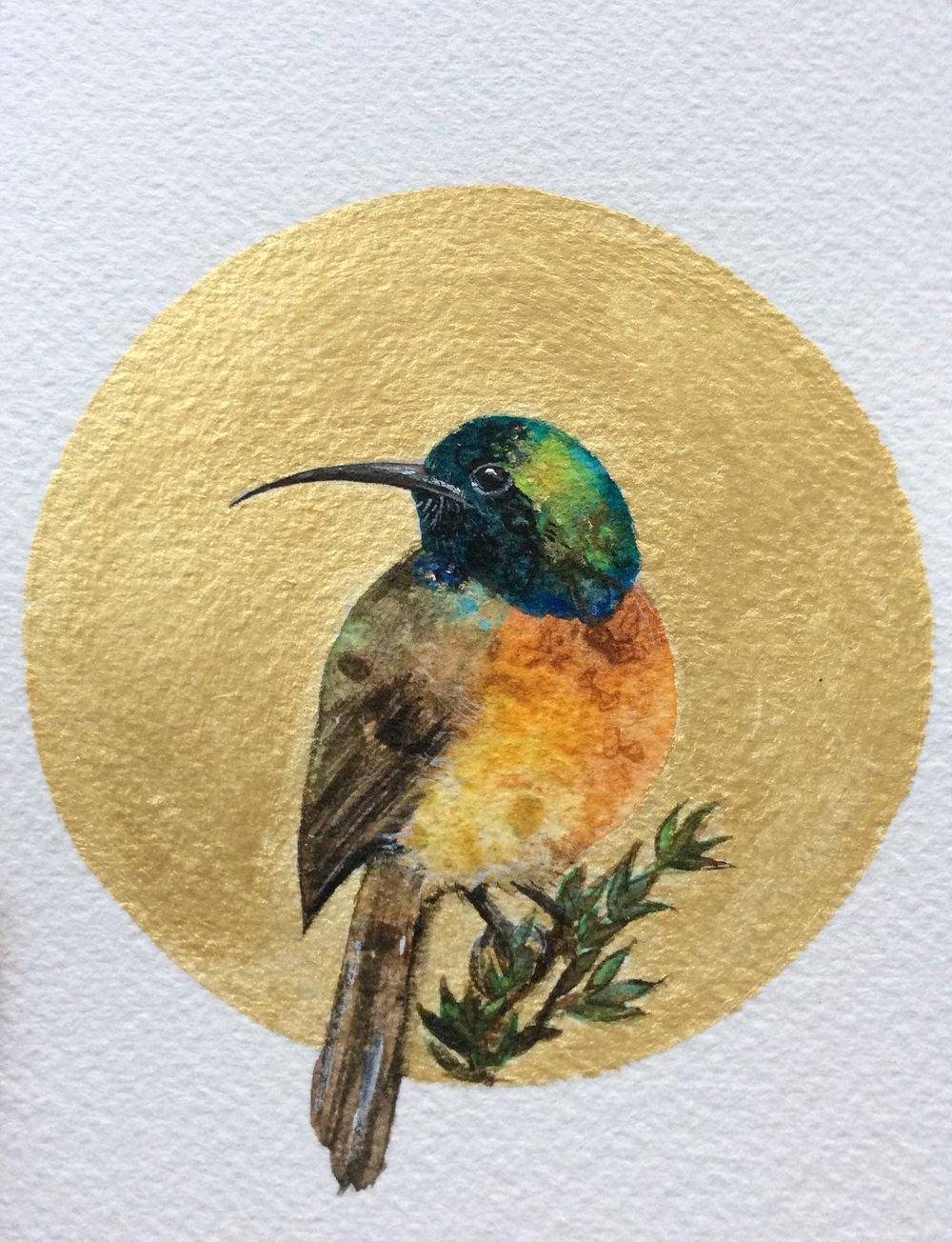 #29. Orange breasted Sunbird Watercolor and gold acrylic - Zoe Wood 2017.jpeg
