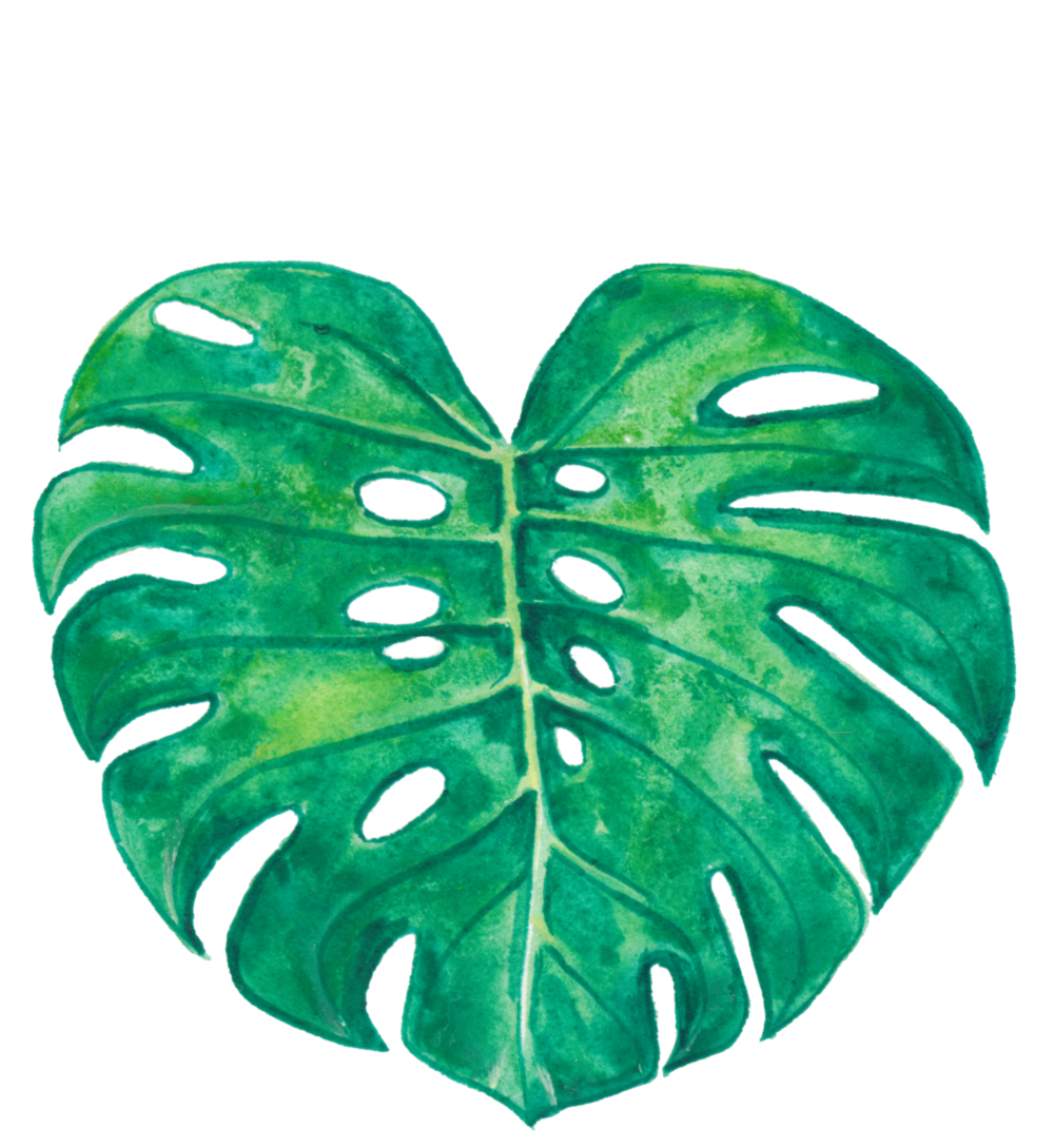 Monstera Deliciosa.png