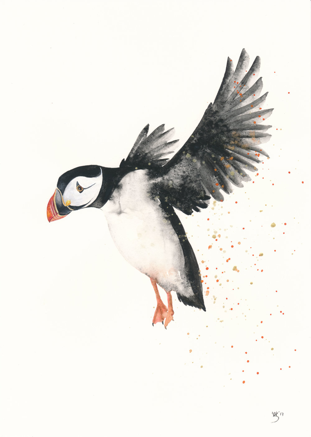 Puffin Flying Watercolour - Zoe Wood 2017