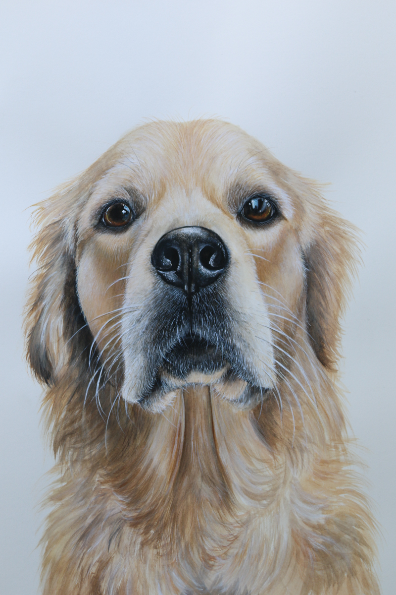 Winnie  Pet Portrait Golden Retriever - Zoe Wood 2017 (1 of 1).jpg