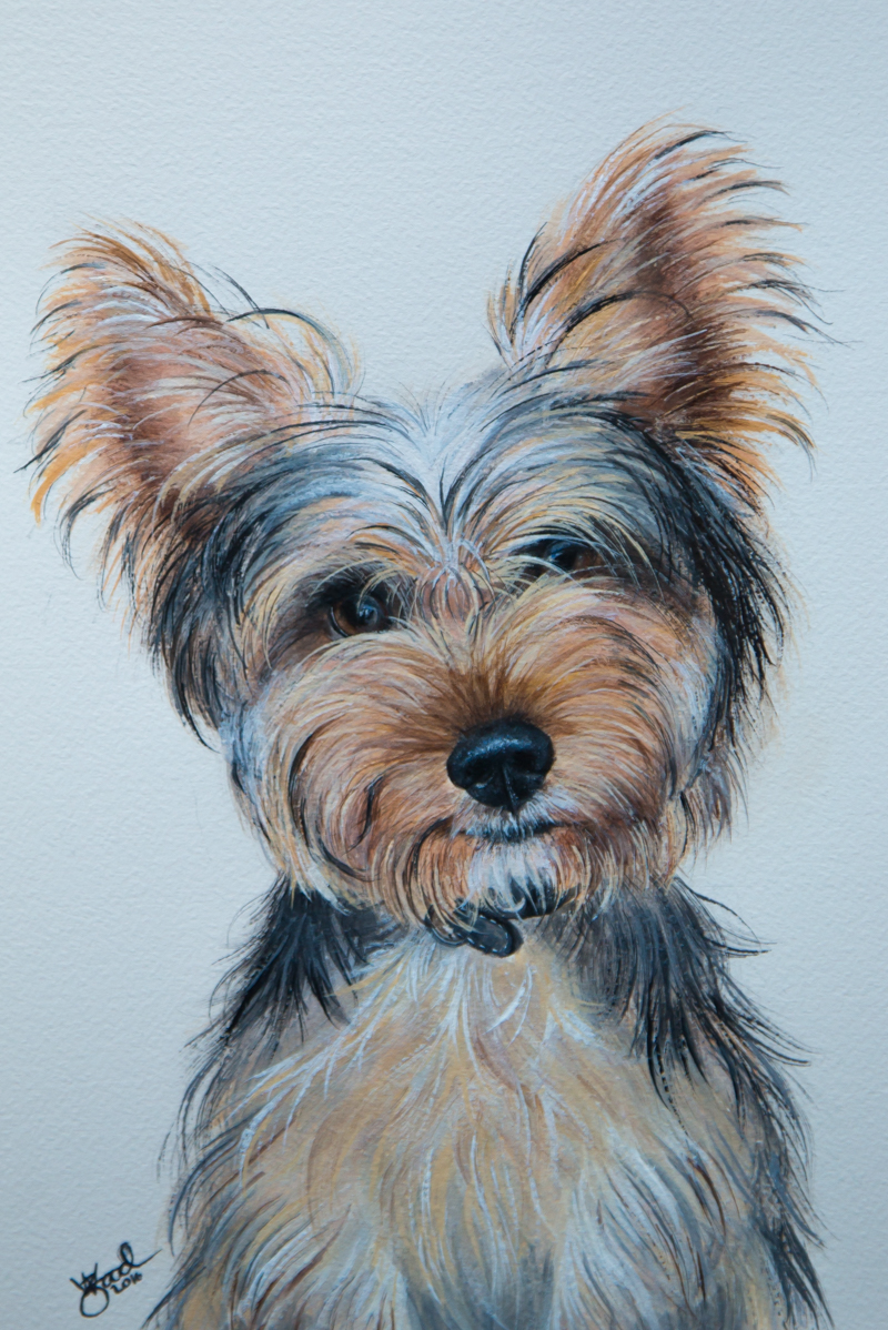 Luna watercolour pet portrait - Zoe Wood 2016.jpg