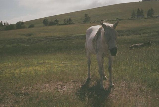 I'm sure this is normal, but it looks creepy right?  #canonae1 #slr #halifax #novascotia #canada #canadian #horse #film #shootfilm #oceanviews #35mm #silenthill #noedit