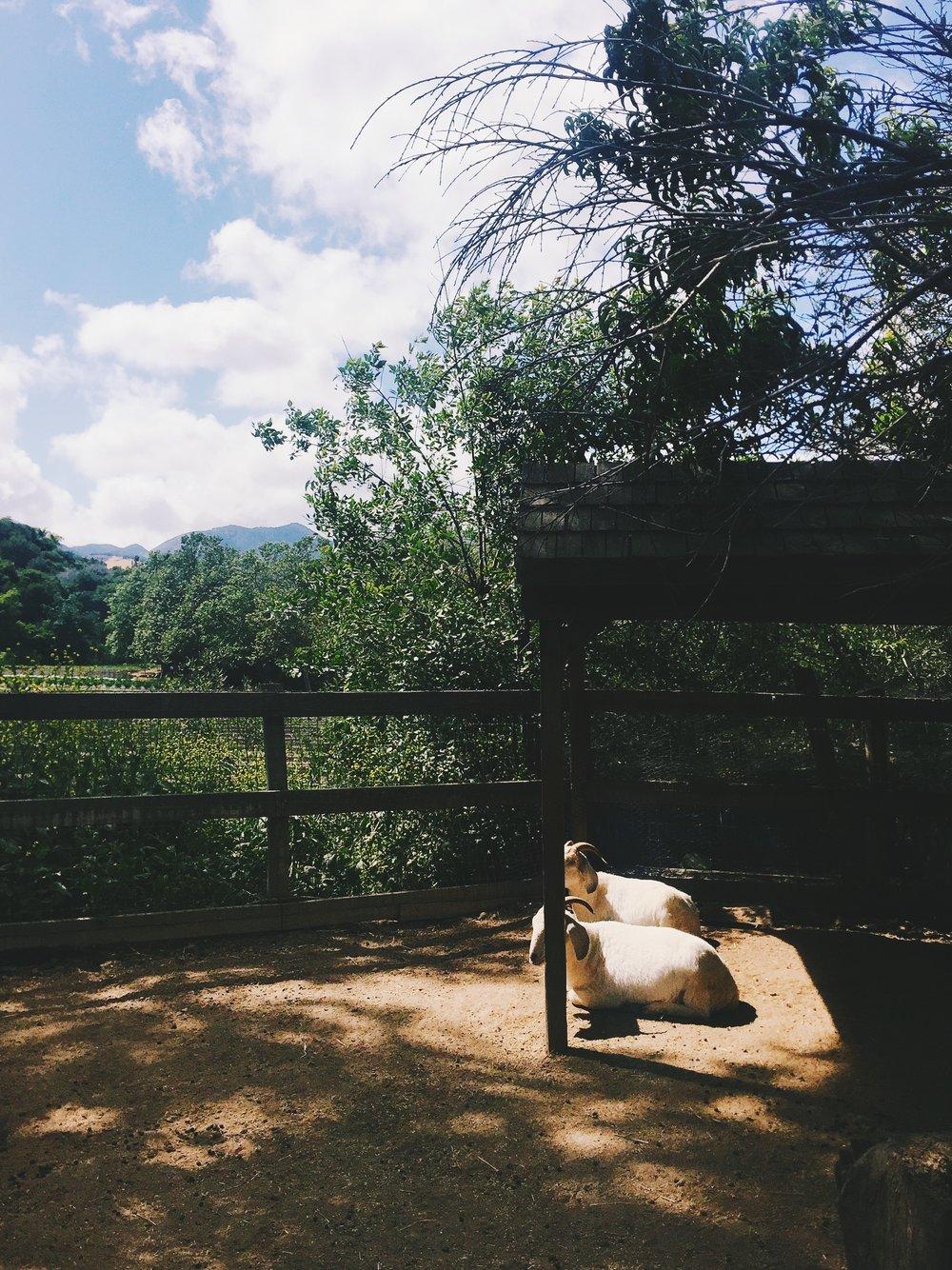Avila Valley Barn. california road trip