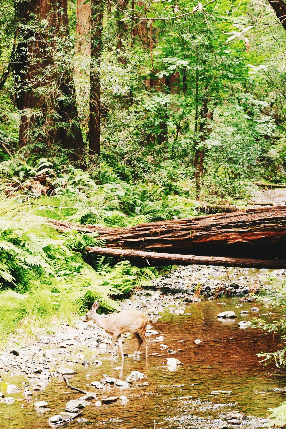 muir woods. california road trip