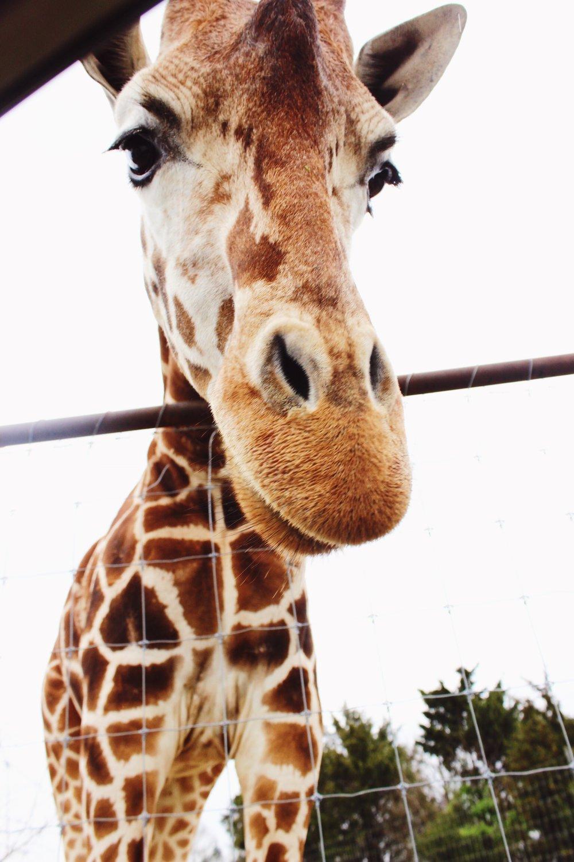 animal safari park