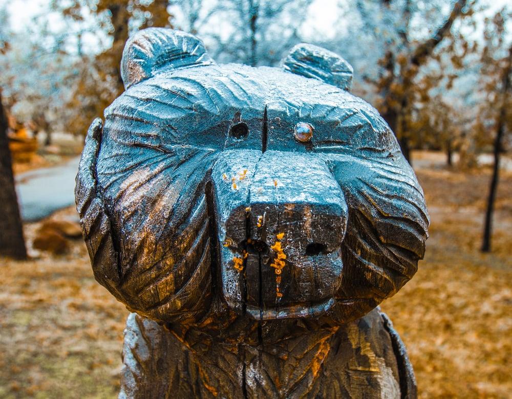 Frozen Bear
