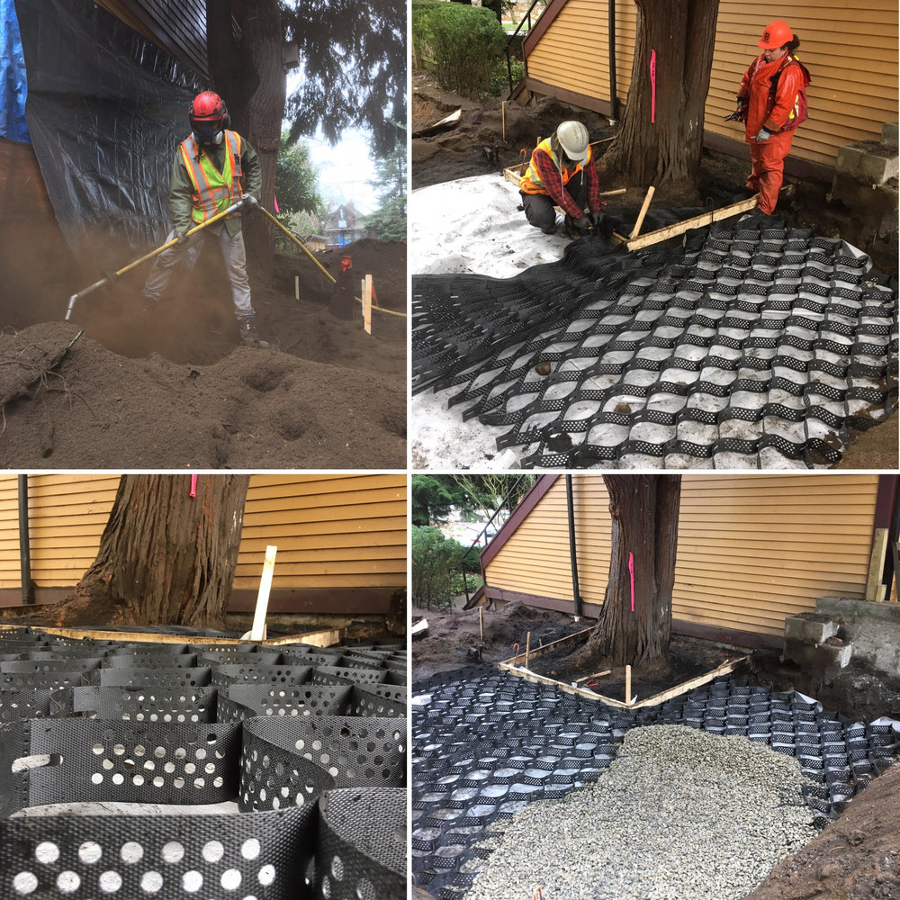 AirSpading to decompact the soil, root prune, and installing GeoCells to retain a significant Cypress tree in downtown Vancouver before house contruction. (1st residential use in North America!)