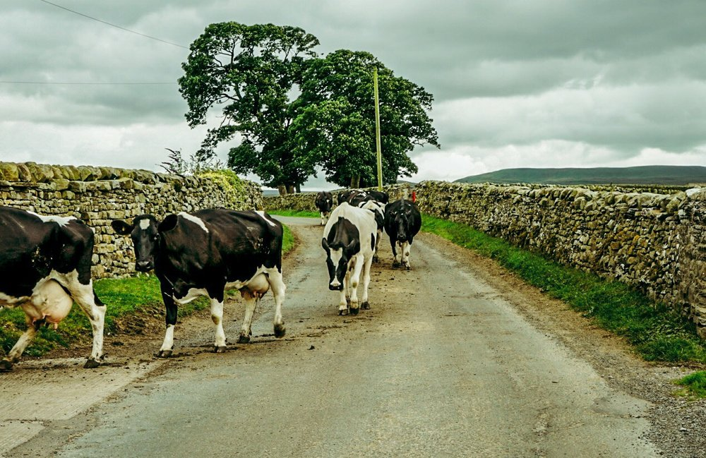 Traffic Jam Yorkshire Dales, U.K.