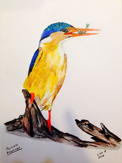Competed in February 2014 using coloring pencils on drawing paper, refernce photo by Willem Kruger.
