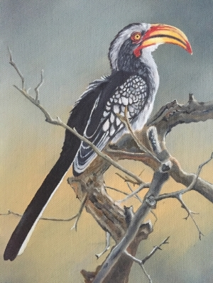 Southern Yellow-Billed Hornbill, 30X20cm, oil on canvas