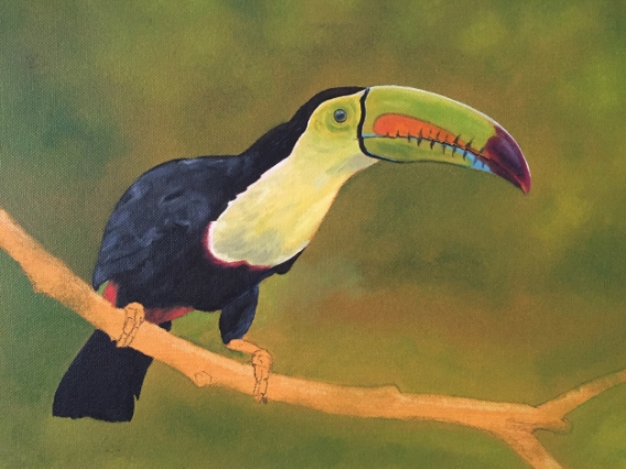 Keel-billed toucan, work in progress