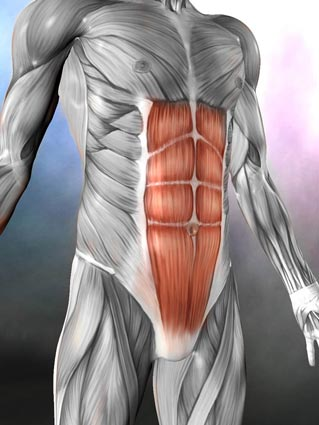 THE SIX-PACK MUSCLE IS THE RECTUS ABDOMINUS AND IS ACTUALLY JUST THE MOST SUPERFICIAL (CLOSEST TO THE SKIN) OF OUR FOUR ABDOMINAL MUSCLES.  IT RUNS VERTICALLY ALONG THE FRONT OF THE ABDOMEN AND WHEN IT CONTRACTS, IT PULLS THE RIB CAGE AND PELVIS TOWARD EACH OTHER, USUALLY RESULTING IN A ROUNDED SPINE (SPINAL FLEXION) AND/OR A TUCKED PELVIS (POSTERIOR TILT).  THINK OF BIRD POSE -  RECTUS HELPS TO CREATE THE ROUNDING ACTION NEEDED